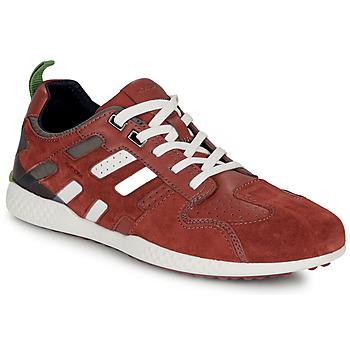 Sko Herre Lave sneakers Geox U SNAKE.2 Brun / Mursten