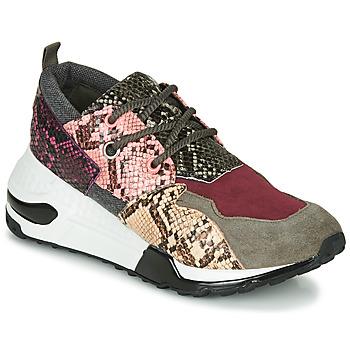 Sko Dame Lave sneakers Steve Madden CLIFF Flerfarvet