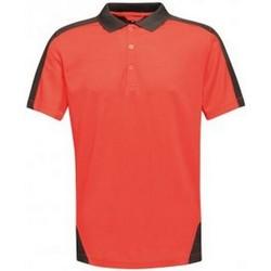 textil Herre Polo-t-shirts m. korte ærmer Regatta RG663 Classic Red/Black