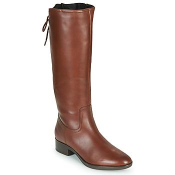Sko Dame Chikke støvler Geox FELICITY Brun