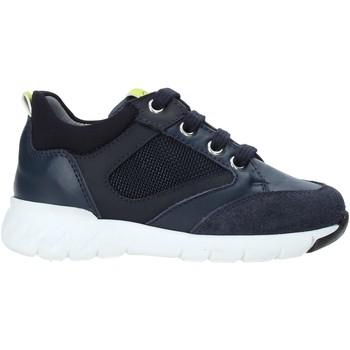 Sko Børn Lave sneakers Nero Giardini A923730M Blå