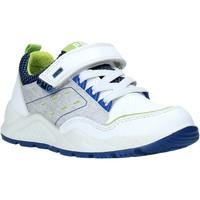 Sko Børn Lave sneakers Primigi 5381500 hvid