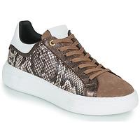 Sko Dame Lave sneakers JB Martin HIBISCUS Brun