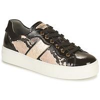 Sko Dame Lave sneakers NeroGiardini  Sort / Guld