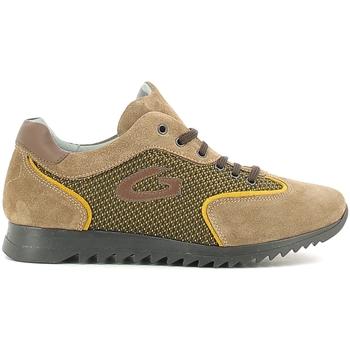 Sko Børn Lave sneakers Alberto Guardiani GK22343G Beige