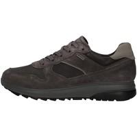 Sko Herre Lave sneakers IgI&CO 8132611 Grå
